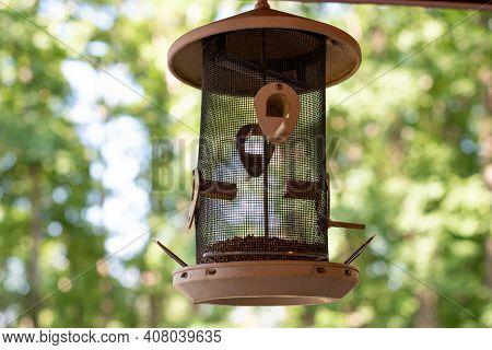 Bird Feeder Nature Food Outdoor Summer Tree