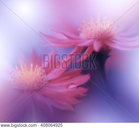 Beautiful macro shot of magic flowers.Border art design. Magic light.Extreme close up macro photography.Conceptual abstract image.Violet and Pink Background.Fantasy Art.Creative Wallpaper.Beautiful Nature Background.Amazing Spring Flowers.Water drop.