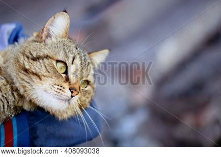 Happy Cat In Owner Hands - Care Trust Concept. Close Up Human Holding Cute Purring Tabby Cat. Cat Mu