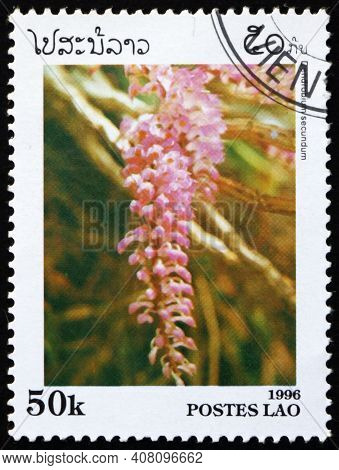 Laos - Circa 1996: A Stamp Printed In Laos Shows Toothbrush Orchid, Dendrobium Secundum, Is A Specie
