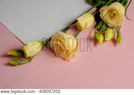 Delicate Eustoma Flowers On A Pink And White Background. Blank Sheet Of White Paper And Copy Space.