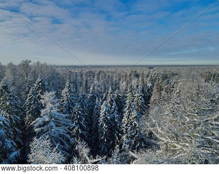 Top View Sunny Forest Aerial View At Winter Day. Drone Shot Of Trees Covered With Hoarfrost And Snow