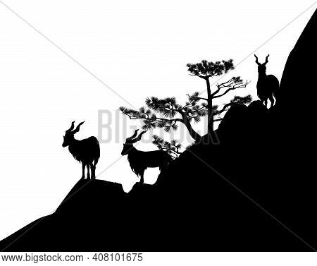 Markhor Mountain Goats Herd On Pine Tree Covered Rock Cliff - Black And White Vector Silhouette Scen