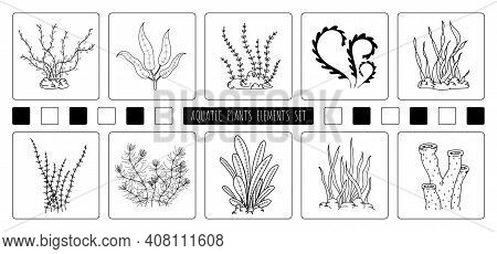 Abstract Hand Drawing Of Aquatic Plants Elements Design Of Element Set. Freestyle Of Drawing For Ico