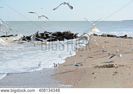 Sandy Seashore With Stones And Sea Gulls. A Flock Of Sea Gulls (birds) In Flight Over The Sea. Wildl