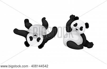Black And White Panda Bear Or Giant Panda With Patches Around Its Eyes And Ears In Sitting Pose Vect