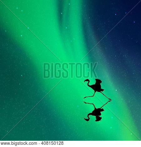 Running Flamingo. Bird Silhouette At Night. Green Aurora Borealis