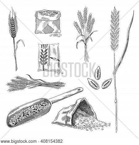 Wheat Grain Sketch Collection. Hand Drawn Black And White Set Of Wheat Grains Plants. Agriculture, O
