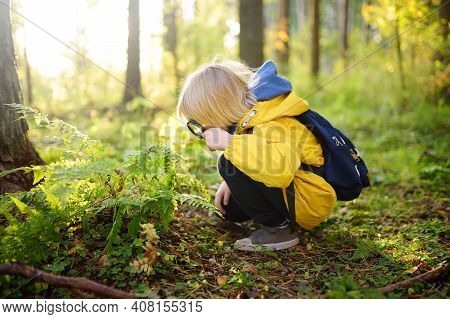Preschooler Boy Is Exploring Nature With Magnifying Glass. Little Child Is Looking On Leaf Of Fern W
