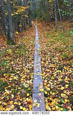 Scenic Boardwalk On The North Country Trail In Ontonagon County Michigan
