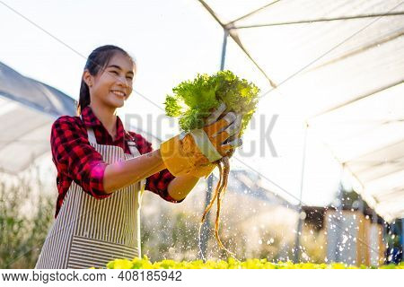 Farmer Ware Agricultural Gloves Keep Vegetable At Hydroponic Farm And Observing Growth Vegetable Met