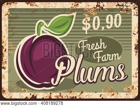 Plums Rusty Metal Plate, Vector Vintage Rust Tin Sign With Ripe Garden Fruit With Leaf On Stem. Prun
