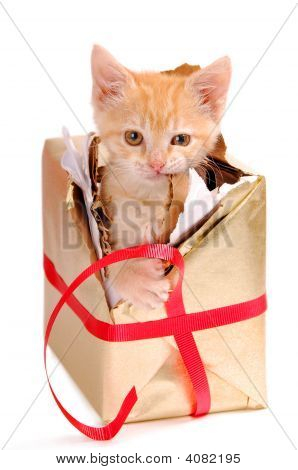 A yellow kitty breaking out of a present. poster