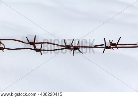 Sharp Rusty Barbed Wire On A White Snow Background. Freedom, Independence And Dictatorship Concept
