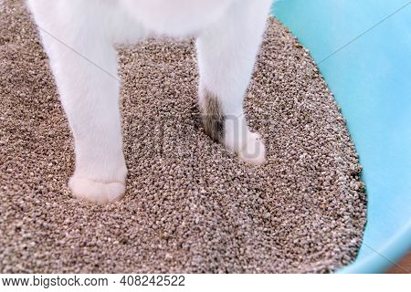 Cat Paws In The Sand, Closeup. Cat Using Toilet, Cat In Litter Box, For Pooping Or Urinate, Pooping