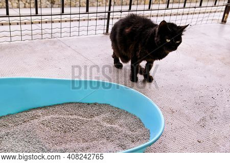 Cat Using Toilet, Cat In Litter Box, For Pooping Or Urinate, Pooping In Clean Sand Toilet. A Black C