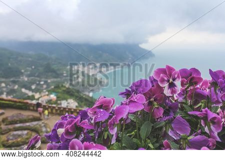 Close Up Of Violet Flowers In The Garden Of Villa Rufolo, Above The Sea, Historic Center Of Ravello,