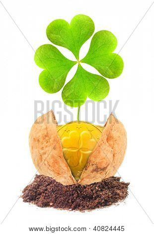 Golden coins and a four leaf clover in the nutshell. Good investment concept.