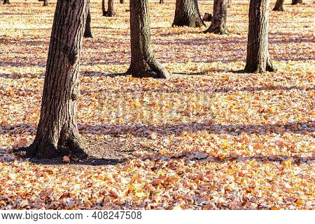 Fallen Leaves In An Autumn Park On A Sunny Day