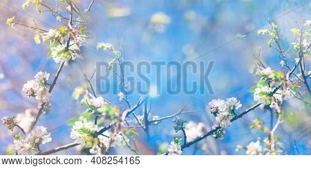 Spring Blooming And Blossoming Flower Branch Against Blue Sky Banner