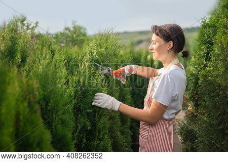 Worker Use Secateurs Cutting Thuja Autumn Pruning Conifer Shrubs Garden Shears, Trim Tidy Shrub