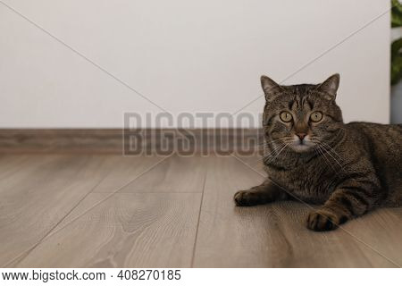 A Dark Gray Cat Lies On The Floor, Looking At The Camera. Against The Background Of A White Wall Wit