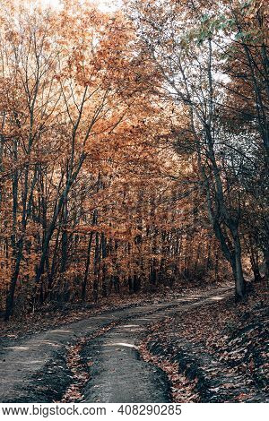 Forest Trail In Autumn Forest. Fallen Orange And Yellow Carpet Leaves In November