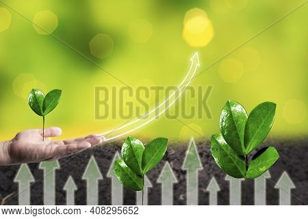 Green Sprout Growing In Man Hand. Young Plant Progress In Business Growth, Gain, Development And Suc