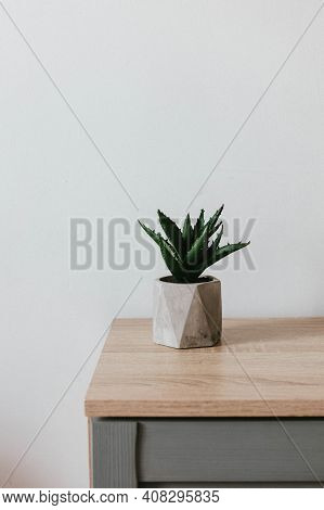 Succulent Plant In Gray Concrete Pot On A Tree Table In A Room Minimal Interior