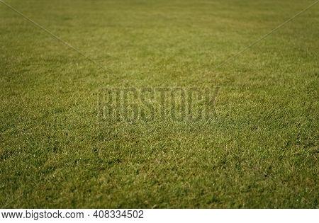 Green Grass Background. Grass Lawn Texture. Soccer Or Golf Grass Field. Grass Land. Grassy Turf. Spo