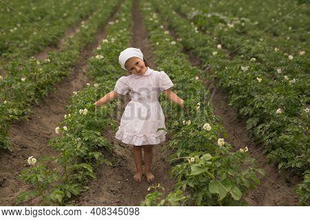 Young Potato Plant Growing On The Soil. A Girl On A Potato Plantation. Pest-free Flowering Potato Be