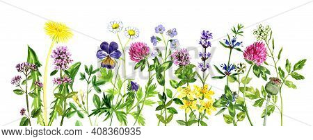 Watercolor Drawing Floral Background, Natural Template With Medicinal Plants, Hand Drawn Illustratio