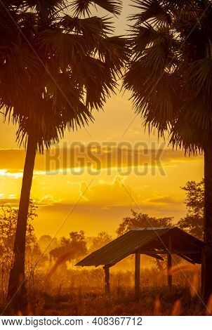 Selective Focus On Old Hut In Forest Near Sugar Palm Tree In The Morning. Golden Sunrise Sky And Sil