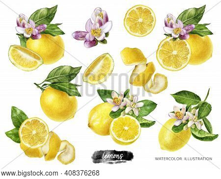 Lemons Big Set Composition Watercolor Illustration Isolated On White Background