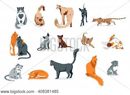 Cute Cats Pet Animals Set. Adorable Domestic Animals Of Different Breeds. Siamese, Oriental, Bengal,