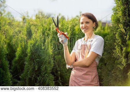 Worker Use Secateurs Trim Cutting Autumn Pruning Conifer Shrubs Garden Shears