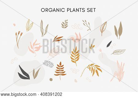 Set Of Vector Hand Drawn Abstract Floral Elements, Leaves, Flowers And Plants In Warm Neutral Tones
