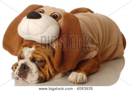 english bulldog dressed up as a dog - purebred dressed up as a mixed breed poster