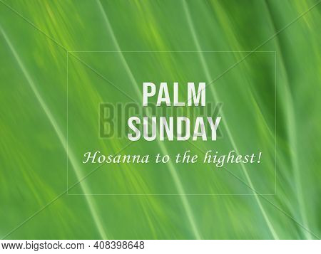 Palm Sunday. Hosanna To The Highest. Happy Palm Sunday Concept And Sign With Text Message On A Close