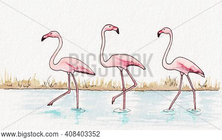 A watercolor illustration of some flamingos