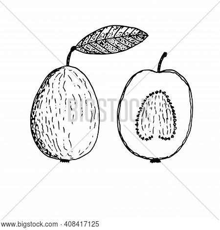 Set Of Guava Vector Illustration Hand Drawn Sketch