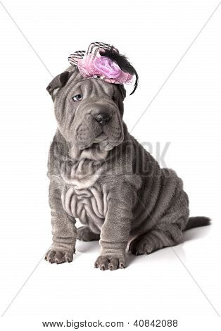 Funny Sharpei Puppy