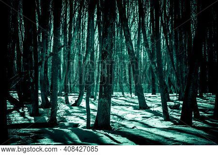 Horror Background. Scary Frightening Tree Trunks In The Deep Winter Forest Glowing Greenish In The D