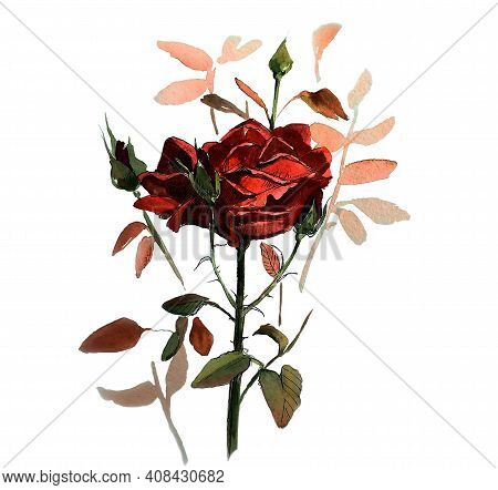 Rose With Bud. Rose With Green  Bud And Leaves On A White Background. Vintage Illustrations Of Flowe