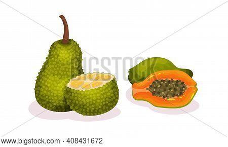 Ripe Exotic Fruits With Papaya And Jackfruit Vector Set