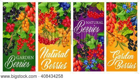 Farm Garden And Wild Berries Harvest Posters. Black And Red Currant, Japanese Honeysuckle, Hippophae