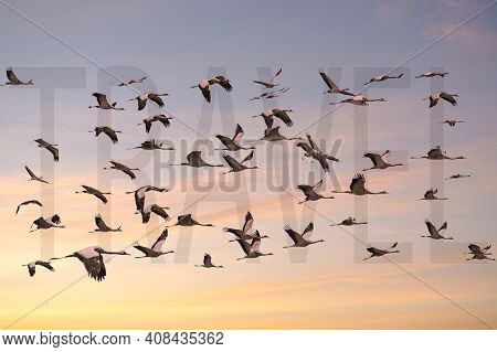 Group Of Birds Forming The Word Travel Flying At Sunset Traveling In Annual Migration