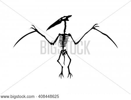 silhouette of dinosaurs skeleton. Hand drawn dino skeleton. Bones of a flying dinosaur, exhibit fossils in the museum