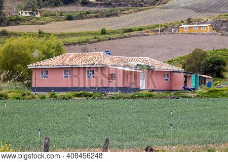Green Onion Field At The Boyaca Department In Colombia