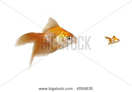 Large And Small Goldfishes (Unfair Competition, Monopoly)